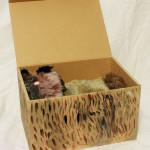 箱猫(まだらねこ)