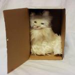 箱猫(しろ)